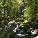 Levada dos Cedros - kleine Wasserfälle kommen sehr oft vor
