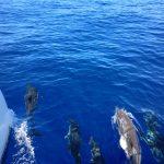 Wunderbare Delfine springen vor unserem Schiff!